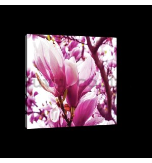 Painting on canvas: Pink Magnolia - 75x100 cm