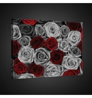 Painting on canvas: White and red roses (1) - 75x100 cm