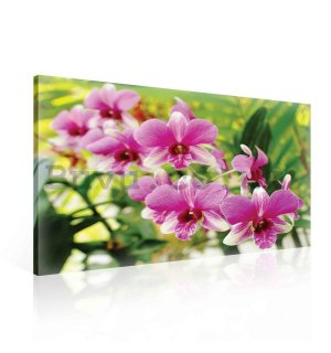 Painting on canvas: Orchid Picture (3) - 75x100 cm