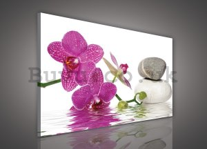 Painting on canvas: Orchid with stones - 75x100 cm