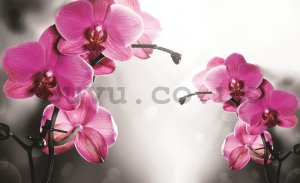 Painting on canvas: Orchid on gray background - 75x100 cm