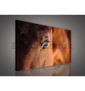 Painting on canvas: Horse (2) - 75x100 cm