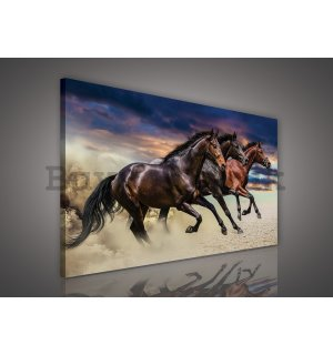 Painting on canvas: Rising Horse - 75x100 cm