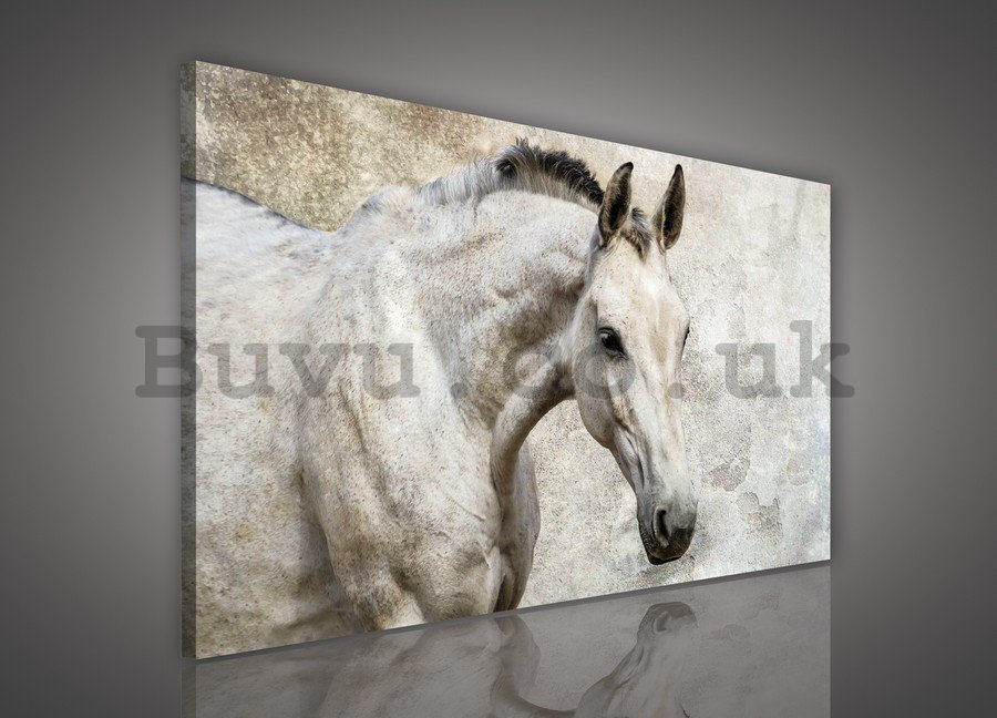Painting on canvas: Horse - 75x100 cm