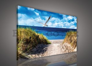 Painting on canvas: Way to the beach (7) - 75x100 cm