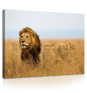 Painting on canvas: The Lion (4) - 75x100 cm