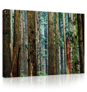 Painting on canvas: Coniferous forest - 75x100 cm