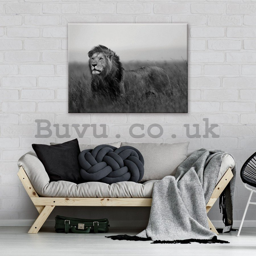 Painting on canvas: The Lion (black and white) - 75x100 cm