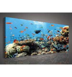 Painting on canvas: Coral reef - 145x45 cm