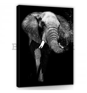Painting on canvas: Black and white elephant - 100x75 cm