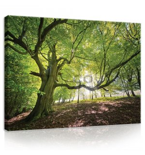 Painting on canvas: Sun in the Forest (5) - 75x100 cm
