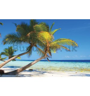 Wall mural vlies: Beach with palm - 184x254 cm