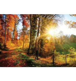 Wall mural vlies: Forest Road - 184x254 cm