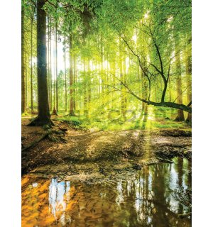 Wall mural: Floodplain forest - 184x254 cm