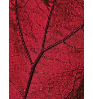 Wall mural: Leaf detail - 184x254 cm