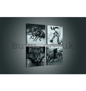 Painting on canvas: Horses - set 4pcs 25x25cm