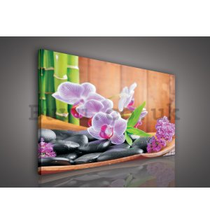 Painting on canvas: Orchid (1) - 80x60 cm