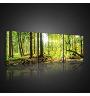 Painting on canvas: Floodplain forest - set 3pcs 25x25cm