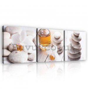 Painting on canvas: Pebbles and flowers - set 3pcs 25x25cm