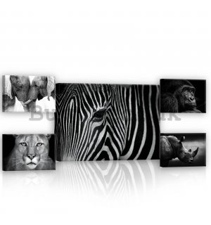 Painting on canvas: Black and white animals (2) - set 1pc 70x50 cm and 4pc 32,4x22,8 cm