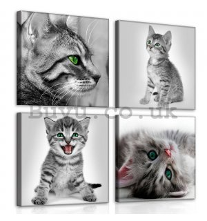 Painting on canvas: Kittens (1) - set 4pcs 25x25cm