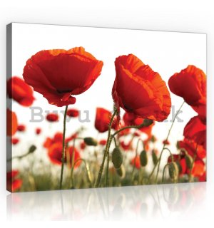 Painting on canvas: Poppy Poppies - 80x60 cm