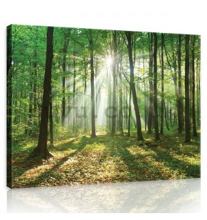 Painting on canvas: Sun in the Forest (3) - 80x60 cm