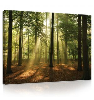 Painting on canvas: Sun in the Forest (4) - 80x60 cm