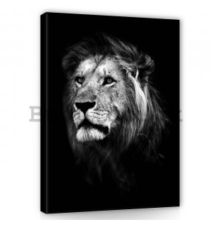 Painting on canvas: The Lion (5) - 60x80 cm