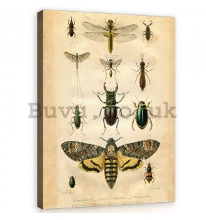 Painting on canvas: Collection of beetles - 60x80 cm