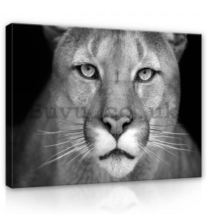 Painting on canvas: Lioness (black and white) - 80x60 cm