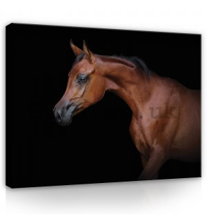 Painting on canvas: Horse (3) - 80x60 cm