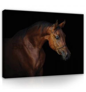 Painting on canvas: Horse (4) - 80x60 cm