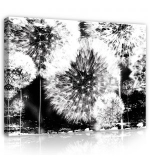 Painting on canvas: Dandelions (black and white) - 80x60 cm