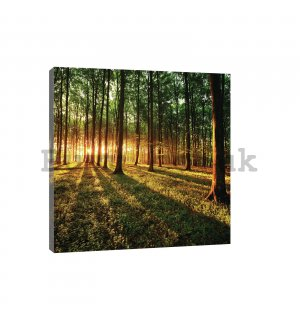 Painting on canvas: Sunset in the Forest - 80x60 cm