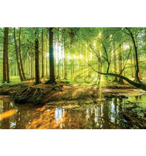 Wall Mural: Floodplain forest - 254x368 cm