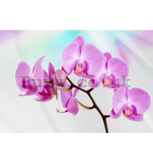Wall mural vlies: Violet orchid - 416x254 cm