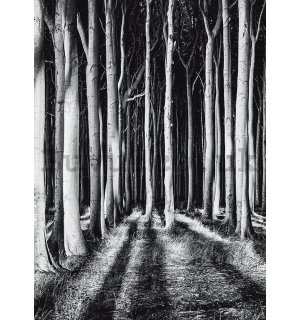 Wall mural: Haunted forest - 184x254 cm