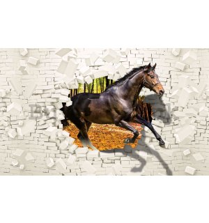Wall mural vlies: Horse from the wall  - 104x70,5cm