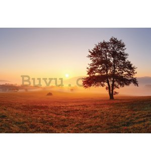 Wall mural vlies: Lonely tree - 200x140 cm