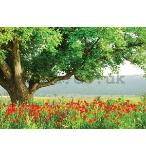 Wall mural vlies: A mighty tree - 400x280 cm