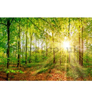 Wall mural vlies: Sun in the forest - 368x254 cm