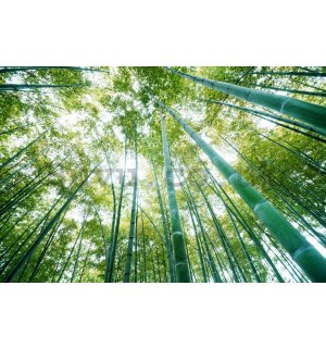 Wall Mural: Bamboo forest - 254x368 cm