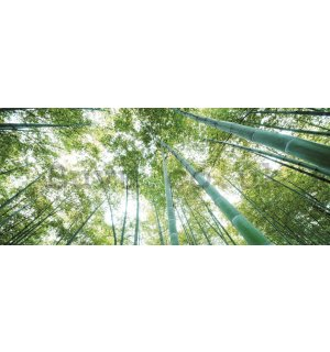 Wall Mural: Bamboo forest - 104x250 cm