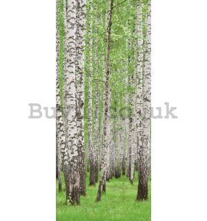 Wall Mural: Birch trees (1) - 211x91 cm