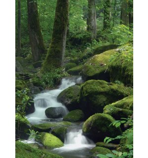 Wall Mural: Forest brook (1) - 254x184 cm