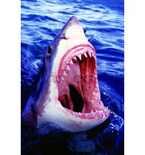 Poster - Big White Shark (1)